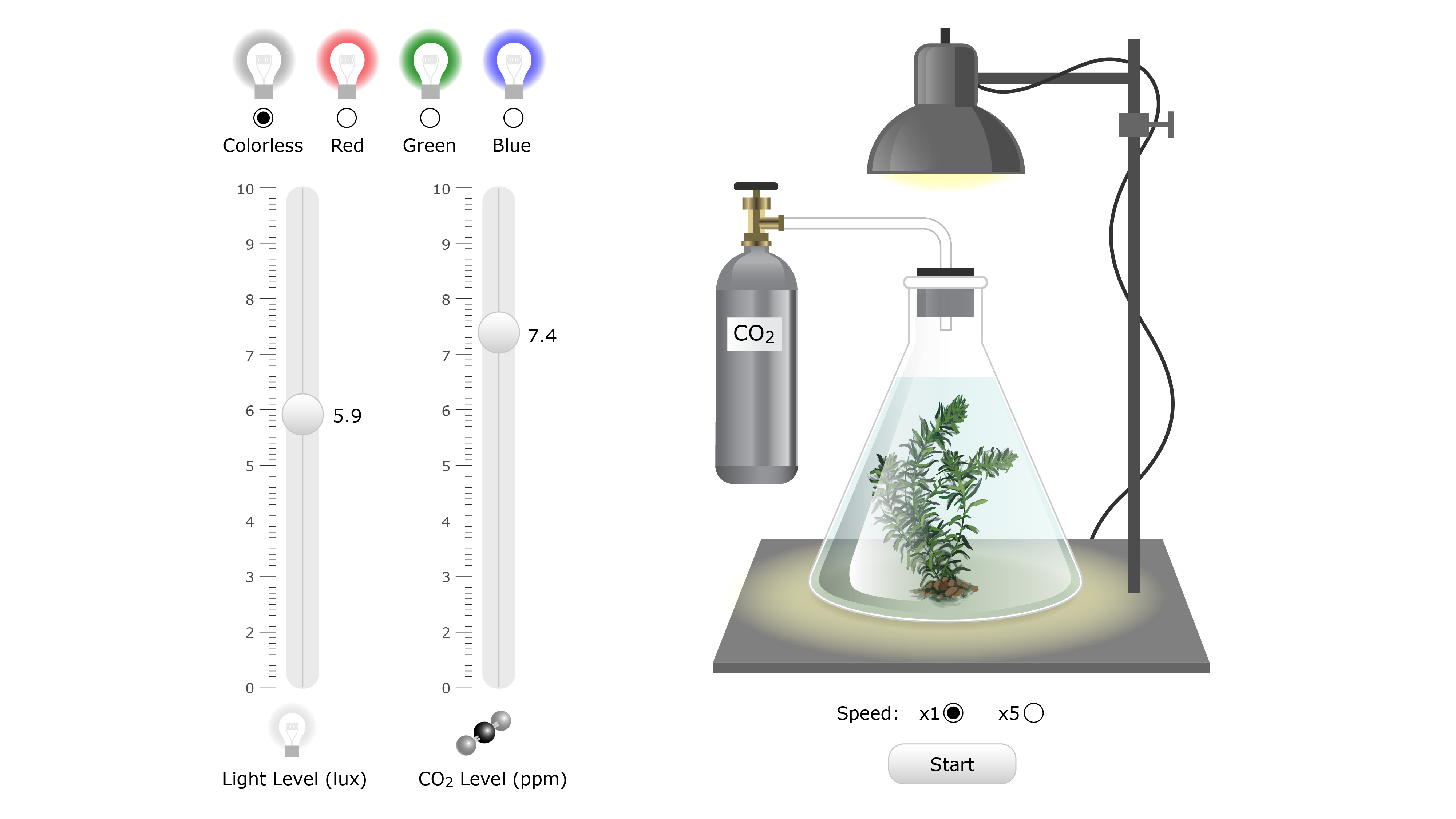 Plant physiology elodea kelly finan pooptronica