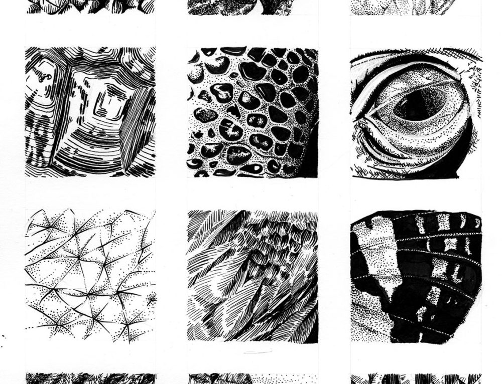 Natural Textures in Pen and Ink
