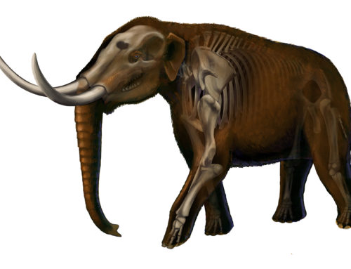 Mastodon Reconstruction